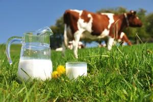 Sữa từ trang trại chưa qua xử lý công nghiệp chứa nhiều acit béo omega-3 hơn sữa đã qua xử lý (Nguồn ảnh: http://blog.agcocorp.com)