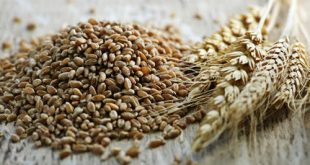 The-Truth-About-Whole-Grain-vs