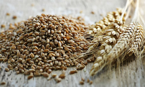 The-Truth-About-Whole-Grain